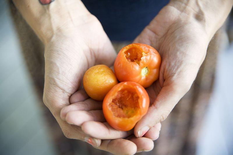Sadtomatoes2